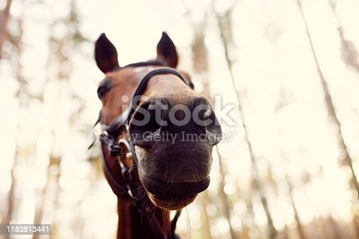 Funny close-up of horse muzzle. Horse riding is unusual hobby of urban living.