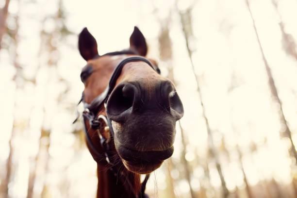 Funny close-up of horse muzzle. stock photo