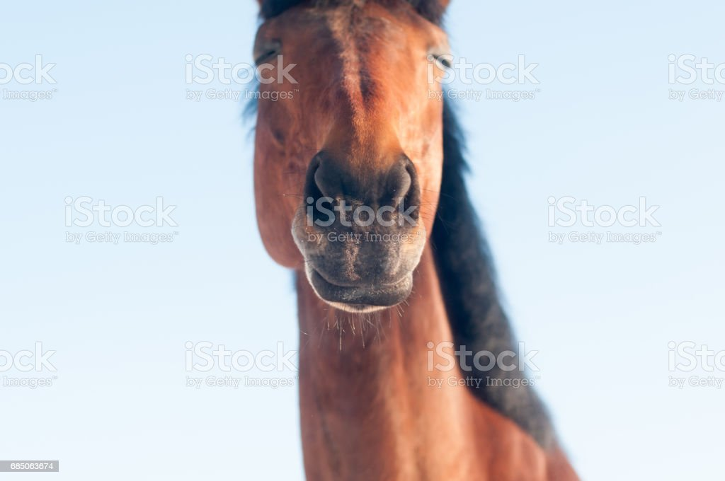 Funny closeup portrait of horse royalty-free stock photo