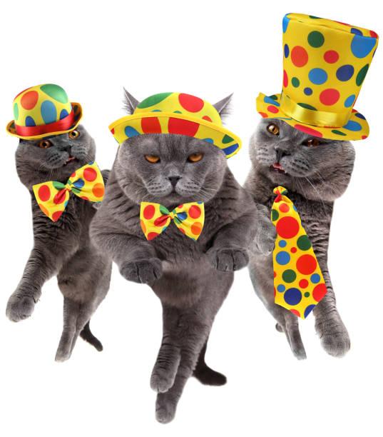 Funny clown cats picture id959898406?b=1&k=6&m=959898406&s=612x612&w=0&h=f3ul2eyodenmi7tnkoktq2dkgakebeu jmqkzs365hq=