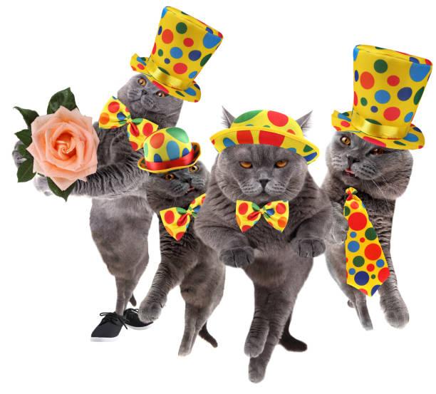 Funny clown cats picture id959900692?b=1&k=6&m=959900692&s=612x612&w=0&h=3zkry5a2dln9ugfpdoenijz ehrth11 glot8naztea=