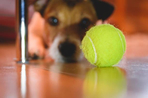 Grappig concept voor 404 errorpagina met hond op zoek naar tennisbal onder de sofa foto