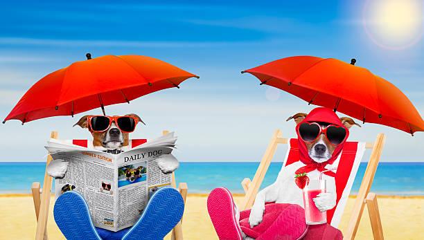lustige paar hunden in liebe am strand - flitterwochen flip flops stock-fotos und bilder