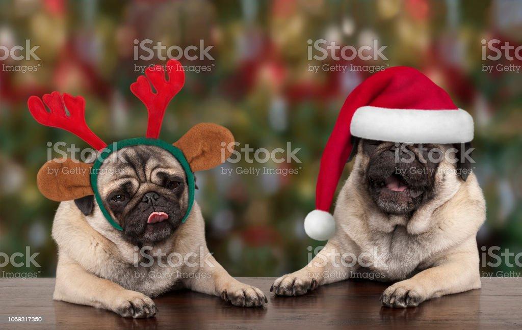 grappige leuke kerst pug puppy honden leunend op houten tafel, het dragen van Kerstman hoed en rendieren geweien, met seizoensgebonden achtergrond foto