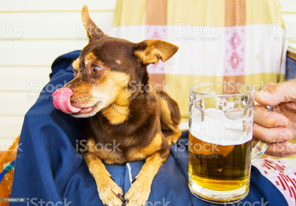 Funny cute dog with a beer, which offers its owner. Humor.