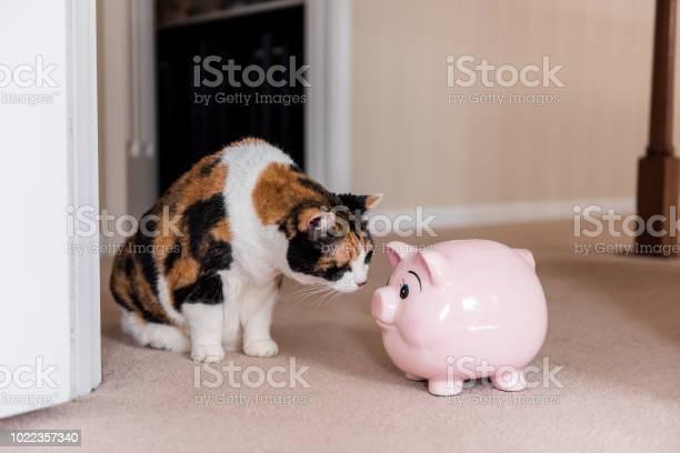 Funny cute female calico cat sitting on carpet in home room inside picture id1022357340?b=1&k=6&m=1022357340&s=612x612&h=b6errcrbktz8dmdnbfejcu0qayvo74bdgv5e8twjft4=