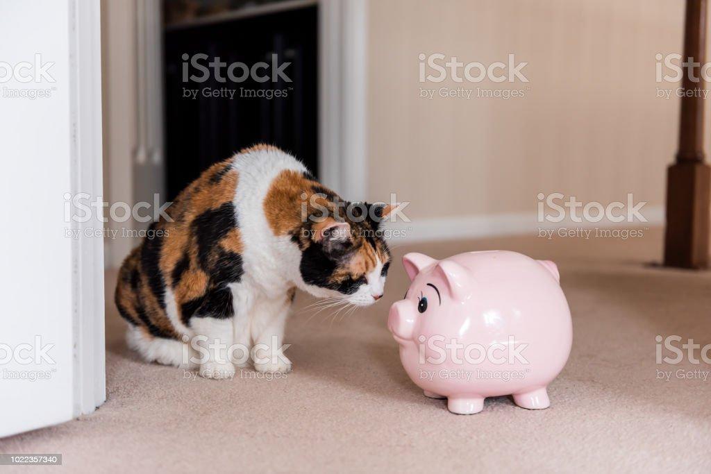 Engraçado bonito feminino gato malhado sentado no tapete na sala de casa, dentro de casa, olhando para o brinquedo cofrinho de porco rosa - foto de acervo