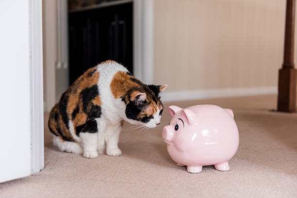 Funny cute female calico cat sitting on carpet in home room inside house, looking at pink pig piggy bank toy Funny cute female calico cat sitting on carpet in home room inside house, looking at pink pig piggy bank toy tortoiseshell cat stock pictures, royalty-free photos & images