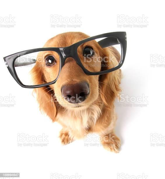 Funny dachshund picture id158894647?b=1&k=6&m=158894647&s=612x612&h=ejoke04sfuen8pimyad   3wmjayxg32okptfxhfypm=
