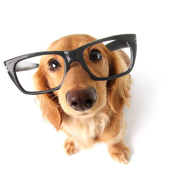 Funny dachshund picture id158894647?b=1&k=6&m=158894647&s=612x612&w=0&h=9xvehvdna2fsqdytkg5hpqwpunqbck9fwr8ycs2xyvm=