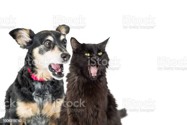 Funny dog and cat with shocked expressions picture id1006319740?b=1&k=6&m=1006319740&s=612x612&h=as80lm chhilcjt20qpe fszzlp5kn27trcefntig8s=
