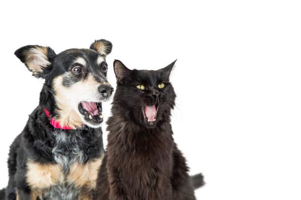 Funny dog and cat with shocked expressions picture id1006319740?b=1&k=6&m=1006319740&s=612x612&w=0&h=gumx zqo5wvlnqbniitxmtdpkub4c8sx8kn3akptmgq=