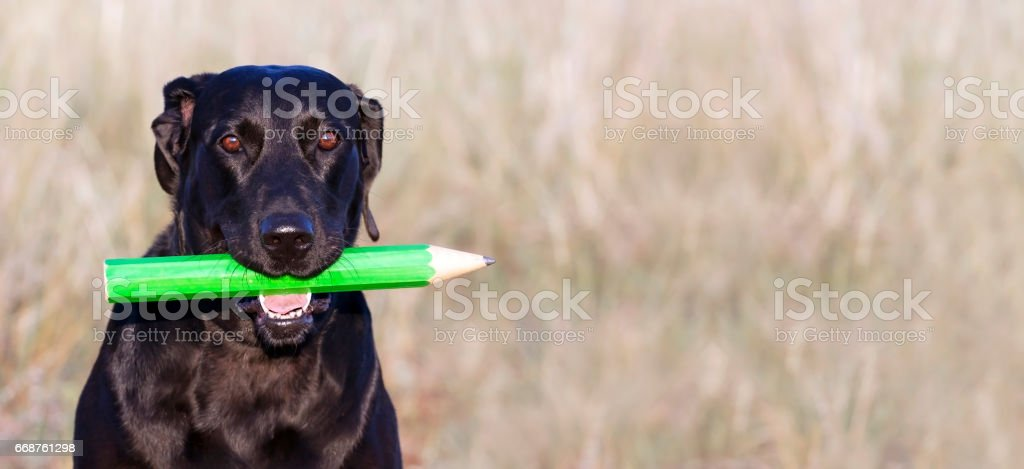 Funny dog banner stock photo