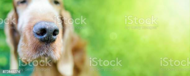 Funny dog banner picture id872845274?b=1&k=6&m=872845274&s=612x612&h=go6js5x cg00h8a9fsquaoybpm4kanrkyjc5o  i3ro=