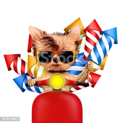 istock Funny dog carry firework rockets 815229972