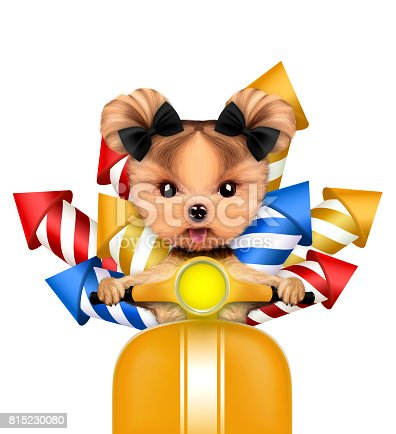 istock Funny dog carry firework rockets 815230080