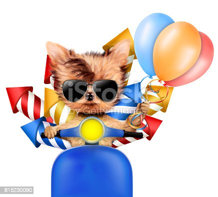 istock Funny dog carry firework rockets 815230090