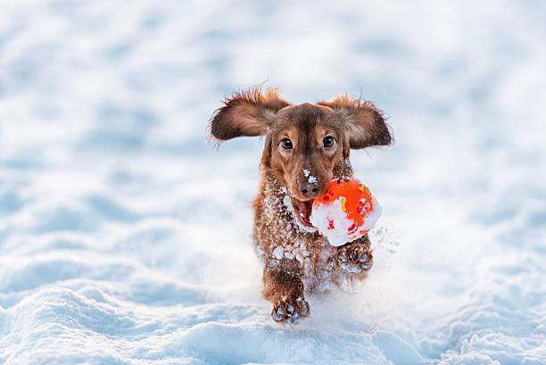 Funny dog dachshund jumps up in winter park picture id512750202?b=1&k=6&m=512750202&s=612x612&w=0&h=0jbhgc5lg0qgktydmainep2za5boskpmznxlj kphn0=