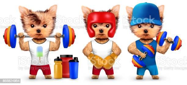 Funny dog holding shaker with sport nutrition picture id855824954?b=1&k=6&m=855824954&s=612x612&h=cxfhyun8uezeecanajtrhj8avhtwanniszfr2toaycc=