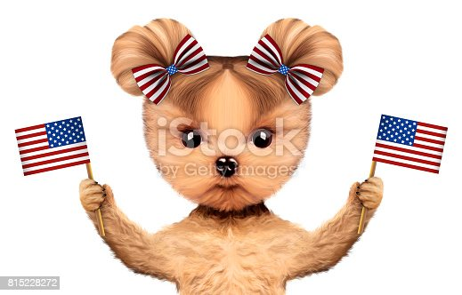 489224301 istock photo Funny dog holding USA flag. Concept of 4th of July 815228272
