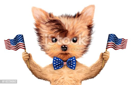489224301 istock photo Funny dog holding USA flag. Concept of 4th of July 815229352