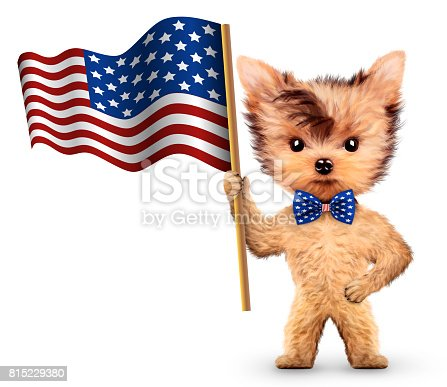 istock Funny dog holding USA flag. Concept of 4th of July 815229380