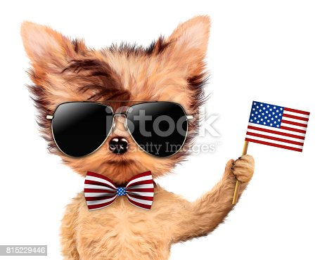 istock Funny dog holding USA flag. Concept of 4th of July 815229446
