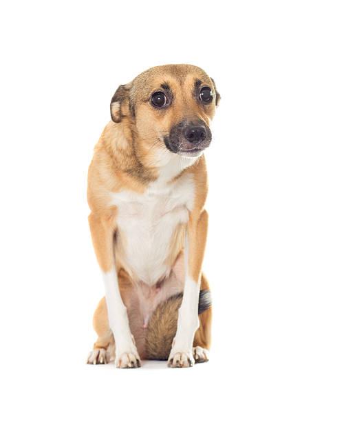 Lustige Hund, die isoliert auf weißem Hintergrund – Foto