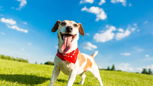 Funny dog outside nature stock photo