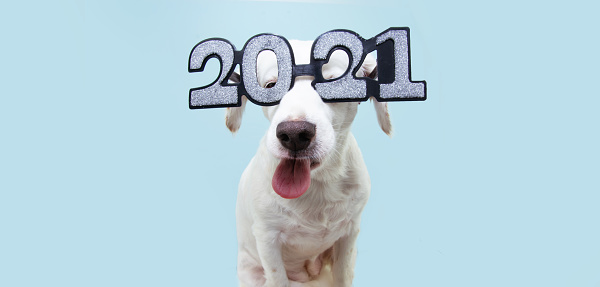 funny dog pet new year sticking tongue out blowing a raspberry wearing glasses with the inscription