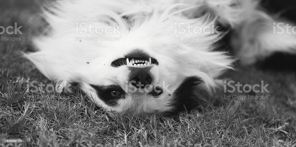 Funny dog foto