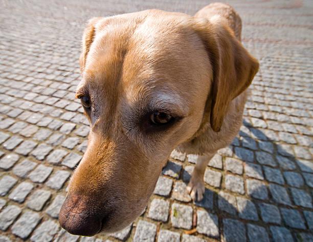 Lustiger Hund – Foto