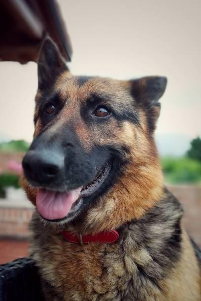 Funny dog - foto stock