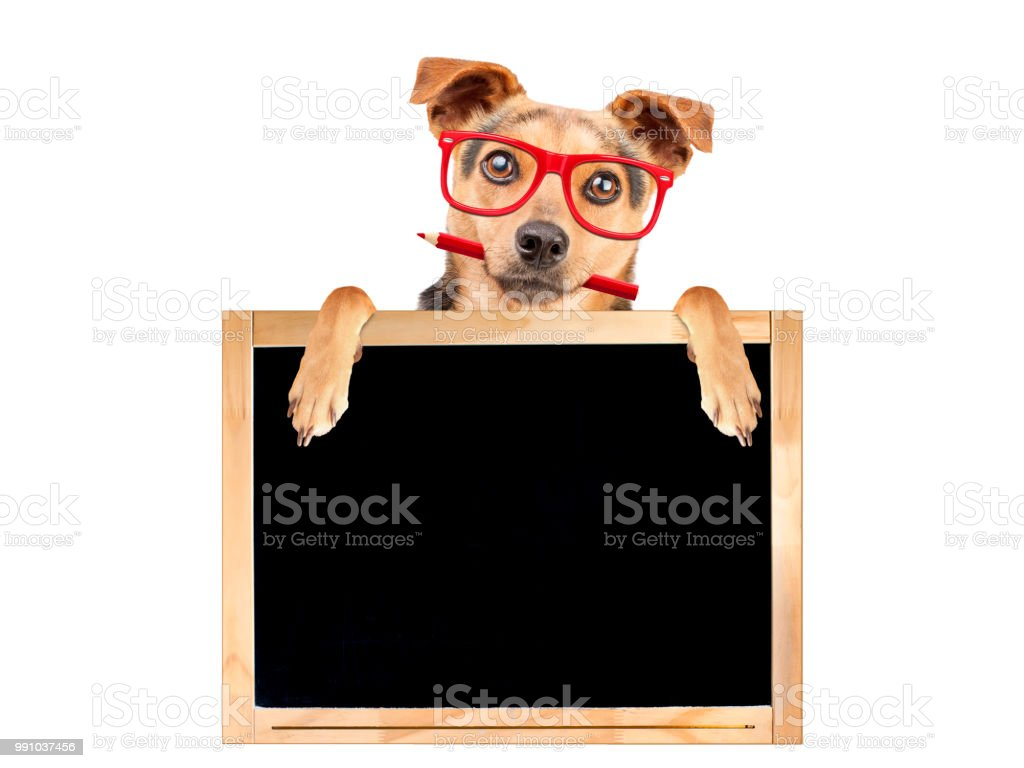 Funny dog red glasses pencil behind blank blackboard isolated stock photo