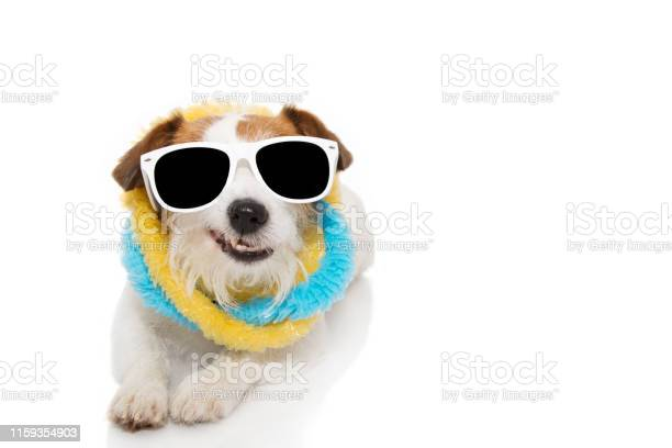 Funny dog summer jakc russell wearing sunglasses and colorful a picture id1159354903?b=1&k=6&m=1159354903&s=612x612&h=lzprrbcbwil2vsfnv5s9q gfdogvgfc5gvcvqskfr0c=