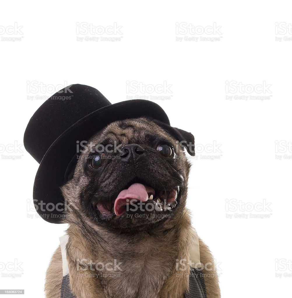 Funny Dog Wearing a Top Hat royalty-free stock photo