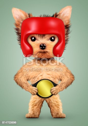 istock Funny dog wearing boxing helmet and belt 814703696