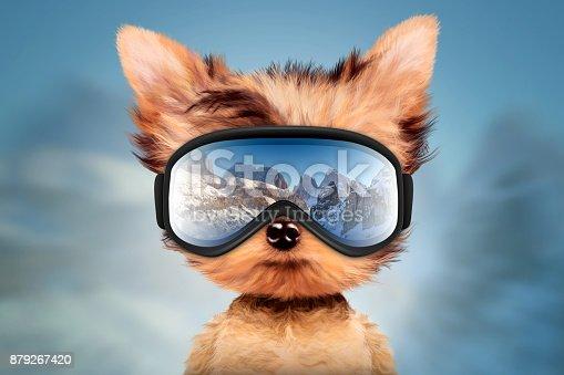 istock Funny Dog wearing ski goggles. Christmas concept 879267420