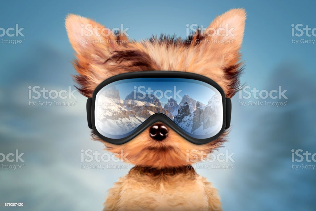 Funny Dog wearing ski goggles. Christmas concept stock photo