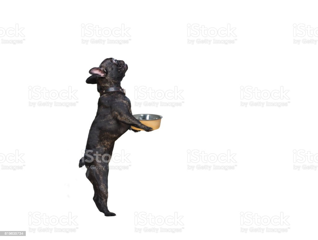Funny dog with food bowl. White background stock photo