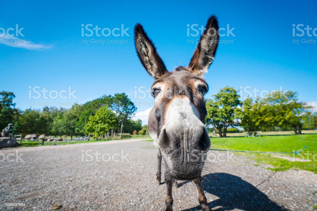 Funny donkey close-up standing on a road stock photo