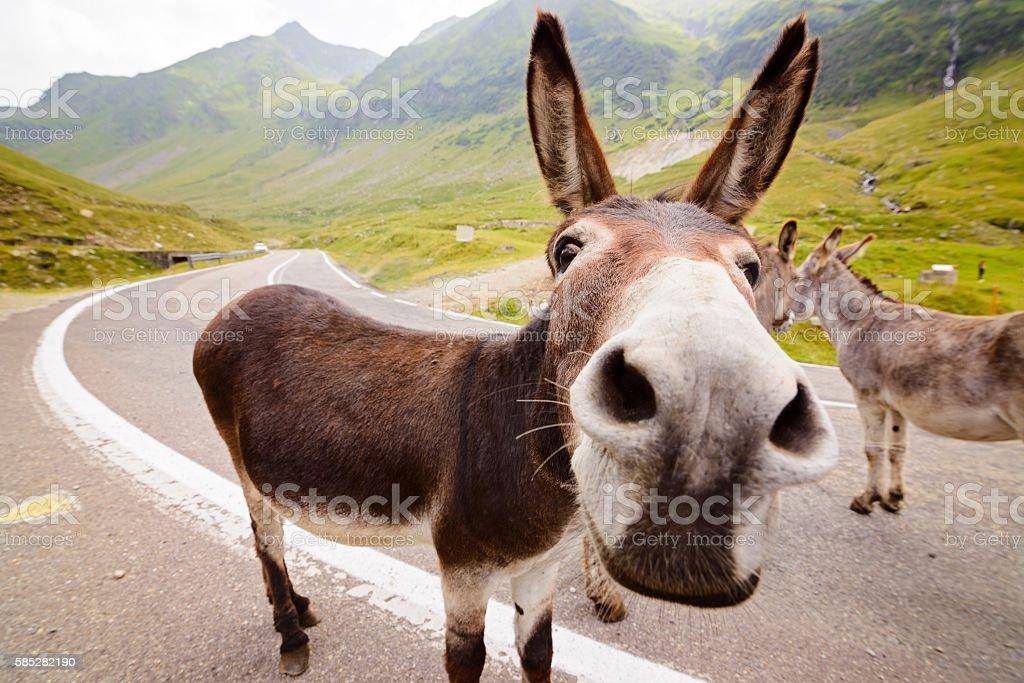 Funny donkey on road stock photo