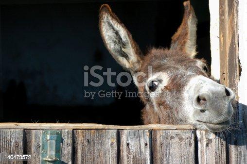 istock Funny Donkey 140473572