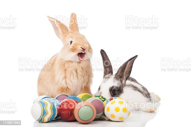 Funny easter bunny picture id174907593?b=1&k=6&m=174907593&s=612x612&h=ndhxanbguuocuvqzx4ooonzfxy5nf2httfmmbh9uca0=