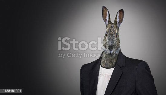 funny easter bunny wearing a suit, Easter holiday concept