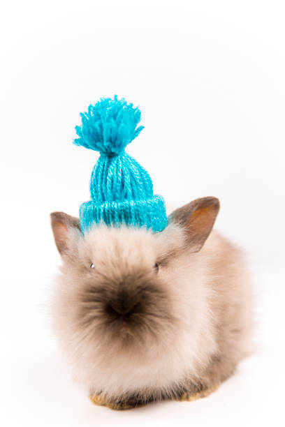 Funny Easter bunny with blue cap on white background isolated