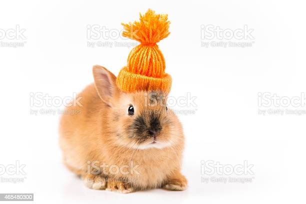 Funny easter bunny with orange cap on white background isolated picture id465480300?b=1&k=6&m=465480300&s=612x612&h=g5xgmt6kngfvu2sn7jilpn5qrae6f dykingxonpisi=