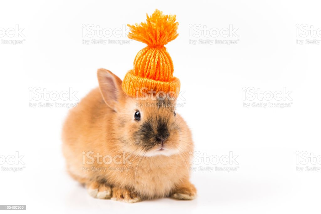 Funny Easter bunny with orange cap on white background isolated stock photo