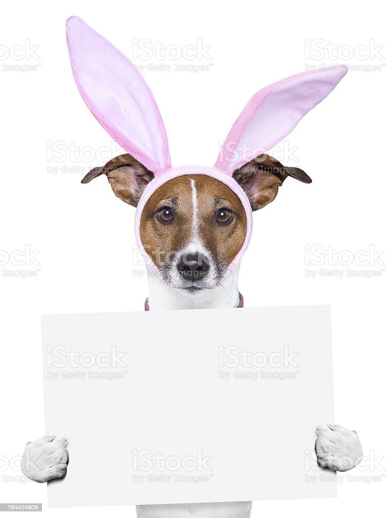 funny easter dog royalty-free stock photo