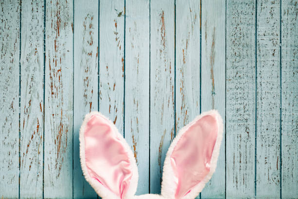 funny easter rabbit ears on old blue wood - cute background - easter bunny stock photos and pictures
